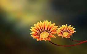 Flower And Love Quotes - macro flower fleurs pinterest macro flower photography