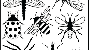 preschool coloring pages bugs insects coloring sheets bugs and insects coloring pages printable
