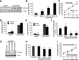 Flag Tag Fasting Induced Protein Phosphatase 1 Regulatory Subunit