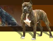 l american pitbull terrier a p b t american pit bull terrier pitbull
