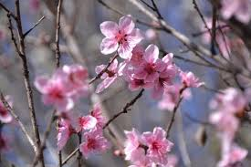 Floral Food by Free Images Branch Fruit Flower Petal Bloom Floral Food