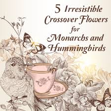 7 butterfly flowers for monarchs and hummingbirds