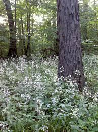 fairhill native plants preservation gardenopolis cleveland