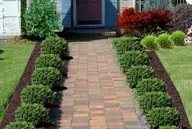 Bushes For Landscaping Top 2016 Shrubs And Bushes For Landscaping Pictures Ideas