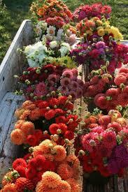 Geoffroy Mottart 2548 Best Flower Power Images On Pinterest Flower Power Flowers