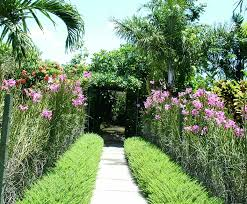 backyard design with garden and green plants