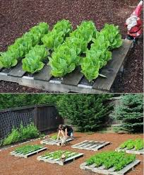 Pallet Garden Decor Raised Garden Beds Pallets Garden On Pinterest Labyrinths