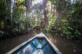nearly 400 new species discovered in the amazon rainforest best