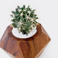 Cactus Planters by Modern Succulent Planters Handcrafted In Uganda U2013 The Citizenry