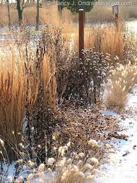 30 best planting winter images on gardens landscaping