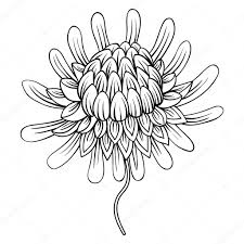 coloring page with etlingera flowers torch ginger philippine w