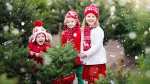 christmas season real christmas trees season remarkable image