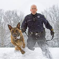 belgian malinois police milton considers k9 program the milton independent onlinethe