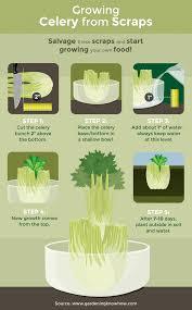regrow vegetables from scraps fix com
