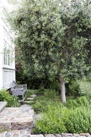 Patio Tree Roses by Garden Visit A Modern Ca Garden Inspired By The Classics