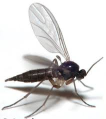 What Are The Small Flies In My Bathroom The Pest Flies Invading Your Home Blog