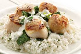 Main Dish With Sauce - scallops with jarlsberg cheese sauce main dishes recipes