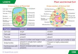 learnhive icse grade 7 biology the cell lessons exercises