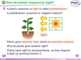 ks4 biology plant responses ppt video online download
