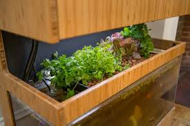 grove ecosystem grow fresh food in your home by grove u2014 kickstarter