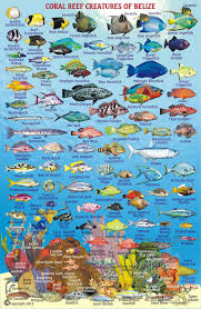 Shark Map Of The World by Belize Maps Dive Fish Id Cards