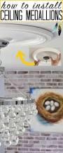 install ceiling medallions heathered nest