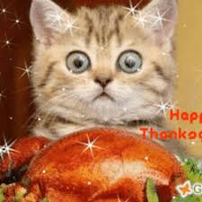 happy thanksgiving and cat photo happy thanksgiving cat
