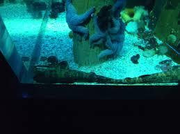 fish tank home aquarium shark tank for homeshark leopard best at