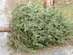 Christmas Tree Pick Up Waste Management To Pick Up Discarded Christmas Trees In Murrieta