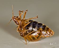Bed Bugs Treatment Cost Ontario Landlord And Tenant Law Bedbugs Can The Landlord Make A