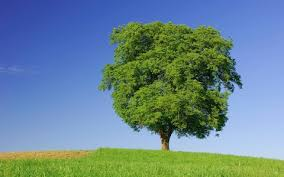 do trees feelings one expert says they do