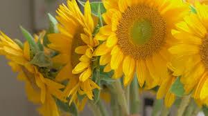 flowers today 5 easy tricks to keep flowers fresh longer