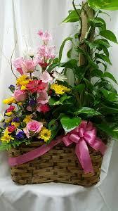 florist augusta ga european plant and fresh flower combination in augusta and martinez