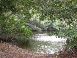 non native plants in florida wetland wikipedia