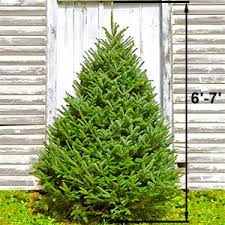 fresh cut christmas trees from costco addicted to costco
