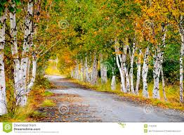 fall trees on country road royalty free stock photos image 7742538