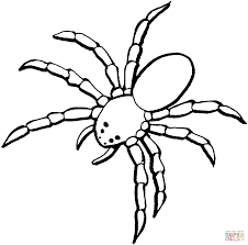 spider 5 coloring page free printable coloring pages