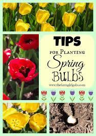 Gardening Tips For Summer - 48 best bulbs images on pinterest flower gardening flowers