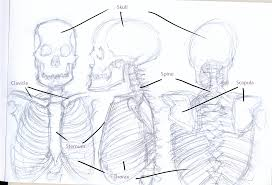 help with anatomy images learn human anatomy image