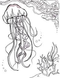 jellyfish ocean ocean coloring sheet aquatic art sea