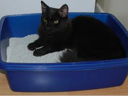 How Do You Get The Urine Smell Out Of Carpet The Ultimate Guide To Eliminating Cat Smell Petmd