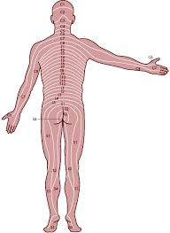 chapter 7 nervous system