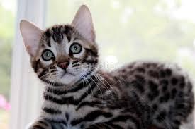 beautiful kittens beautiful kitten kittens animals cats pixoto