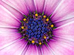 List Of Flowers by Macro Flower Photography Flower Pictures Art Subjects