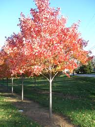 fall tree planting deciduous trees from root s nurseries