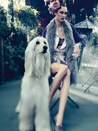 afghan hound mandarin 174 best a and her dog images on pinterest animals dogs