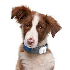 dessin animal shelter animal shelter in honesdale pa usa adopt