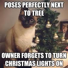 Fail Memes - cat pose fail memes quickmeme
