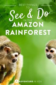 top 25 best the amazon ideas on pinterest amazon rainforest