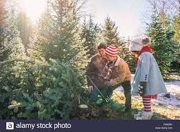 christmas tree farm family stock photos u0026 christmas tree farm